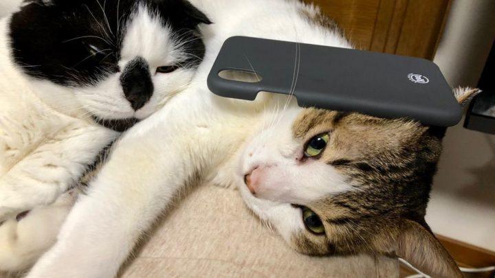 猫に乗せても気付かないほど軽量なケース